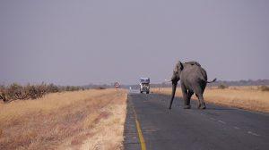 botswana-1653101_640